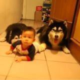 Quand des chiens imitent un bébé (Vidéo du jour)