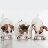 Edito : Existe-t-il vraiment une bonne façon de nourrir son chien ou son chat ?