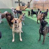 Ce chien a une drôle de façon de dire bonjour à tous les autres chiens de son chenil (Vidéo)