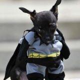 15 chiens déguisés qui détestent Halloween !