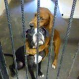 Dernière photo de Keira et Kala avant l'euthanasie...