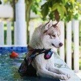 Ces 10 chiens qui adorent se rafraîchir dans l'eau sont absolument adorables !