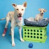 Mourant, un chien de refuge reçoit un don de sang inattendu qui lui sauve la vie
