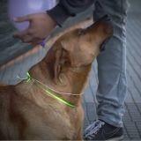 Des ballons pour aider les chiens errants de Santiago (Vidéo du jour)