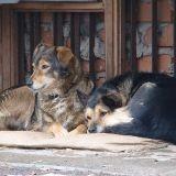 Qui empoisonne les chiens de Moscou ?