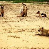 A Gurgaon en Inde, on déplore 50 morsures de chiens errants par jour