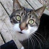 Fort McMurray : des amoureux des animaux veulent évacuer les rescapés de l'incendie