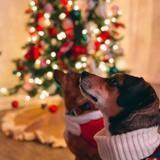 Ses chiens n'aiment pas son sapin de Noël : cette année elle a trouvé une astuce imparable pour le garder intact !