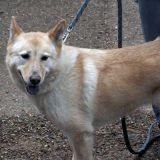Des chiens guides pour les sourds et malentendants