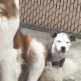 Le chiot fonce vers un immense chien qui dort : la réaction du toutou est inoubliable