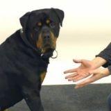 Les chiens, le magicien et la friandise disparue (Vidéo du jour)