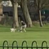 Elle donne des coups de pied à ses chiens mais n'avait pas remarqué qu'elle était filmée (Vidéo)