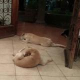 Des chiens errants assistent aux funérailles de la femme qui les a aidés