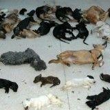 3 ans de prison pour la directrice d'un refuge qui avait tué plus de 2 000 chiens et chats