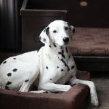 Deux chiens retrouvés étouffés : accident ou acte de malveillance ?