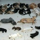 Scandale : une association de protection animale assassine 2200 chiens et chats