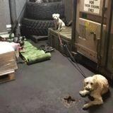 Incendies en Australie : 135 chiens et leurs propriétaires accueillis sur un navire de la marine (Vidéo)