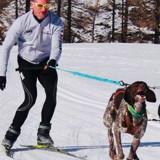 Ski joëring : tout savoir sur cette discipline à pratiquer avec votre chien