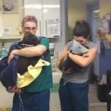 Cette équipe vétérinaire a la plus adorable façon de réconforter les chiens après leurs opérations