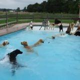 Des chiens, une piscine, un grand moment de bonheur (Vidéo du jour)