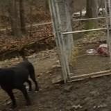 166 chiens maltraités sauvés d'un véritable cauchemar : un des chiens est différent et intrigue les sauveteurs