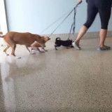 Elle entre dans un refuge avec ses 3 chiens et prend une décision déchirante (Vidéo)