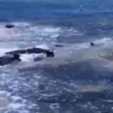 Il filme des requins, des chiens approchent et ce qui se passe est à couper le souffle (Vidéo)