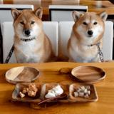 Ce restaurant à Shanghai fait sensation auprès des propriétaires de chiens
