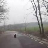 Une vétérinaire voit une ombre noire au milieu de la route. En s'approchant, elle découvre l'insoutenable vérité