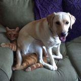 Les 7 choses qui prouvent que les chiens sont supérieurs aux chats