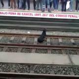Une femme sauve un chien tombé sur les rails d'une gare et risque la prison