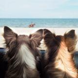 3 idées pour profiter à fond des vacances avec son chien ou chat