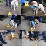 Thouars : les gendarmes ont retrouvé 23 chiens volés et recherchent leurs propriétaires