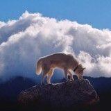 10 chiens aventuriers qui vont vous donner envie de voyager avec le vôtre