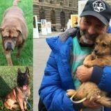 Diesel, Philae, Athéna… ces chiens qui ont marqué 2015