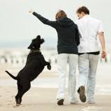 5 astuces pour empêcher votre chien de sauter sur vous