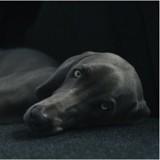 Pourquoi faire passer un scanner à son chien ? Un vétérinaire vous répond !