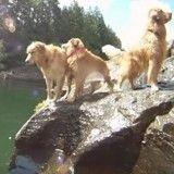 Heureux, ces 13 chiens jouant dans l'eau vont vous faire sourire (Vidéo du jour)