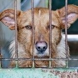 Arrachés à un trafic de peau et de viande, 5 chiens s'apprêtent à changer de vie