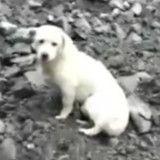 Ce chien qui attend son maître dans les gravats après l'éboulement en Chine va vous émouvoir