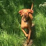 Le chien de la famille meurt parce que personne ne connaît le xylitol