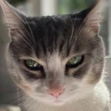 Elle ouvre la porte et pousse un cri en voyant ce que son chat a déposé en guise de cadeau !
