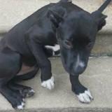 Il trouve un chien attaché à une balustrade, en s'approchant il découvre un petit mot