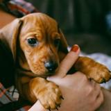 Et si vous obteniez un congé pour vous occuper de votre animal ?
