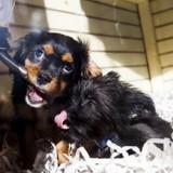 Il achète un chiot dans une animalerie : lors d'une visite chez le vétérinaire, il comprend qu'on lui a menti