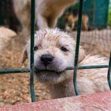 L'Ecosse va-t-elle interdire la vente de chiots et chatons en animalerie ?