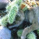 Elle voit un chien pris au piège dans un cactus, se précipite pour l'aider et comprend son erreur