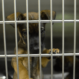 Trafic d'animaux : les victoires et les espoirs de la cellule anti-trafic de la SPA