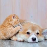 ACACED : tout ce que vous devez savoir sur l'Attestation de Connaissance obligatoire pour les métiers animaliers