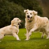 Comment calculer l'âge de son chien en âge humain ? La réponse en vidéo